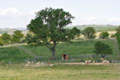 alpaca sasso d'ombrone gr