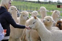 vendita fibra alpaca